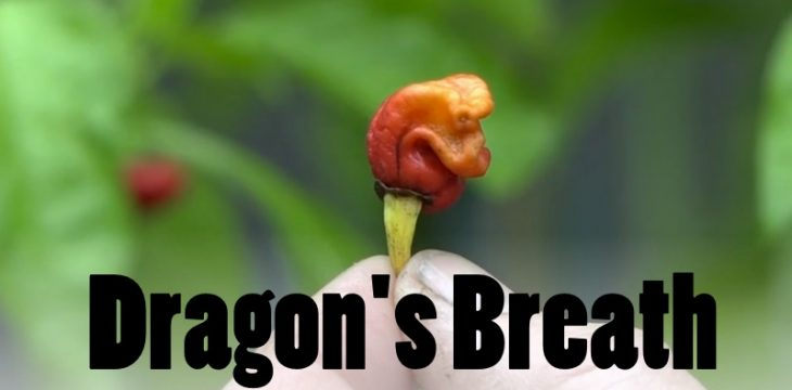 Dragon's Breath Chili